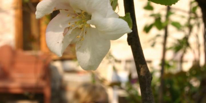 Tavasz az erdőbényei kertekben
