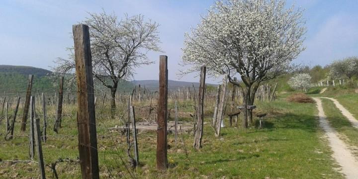 Húsvét, tavasz, borok, programok