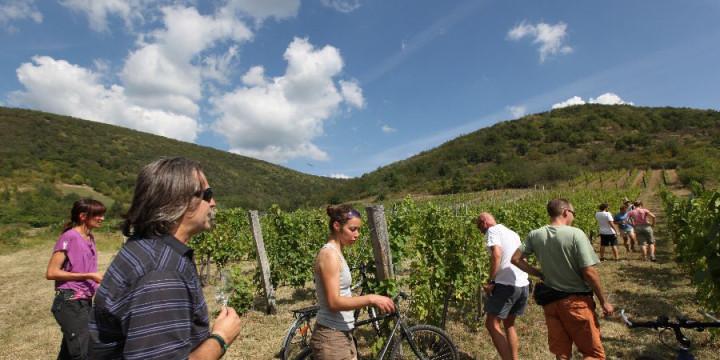 Pünkösd Erdőbényén: biciklitúra a Narancsi dűlőbe