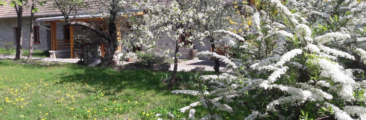 Tavasszal zöldben Erdőbényén